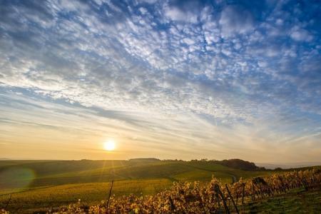 Poptávka po orné půdě zvedá její ceny. Slovácko není výjimkou