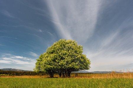 Zemědělská půda jako investice. Vyplatí se?