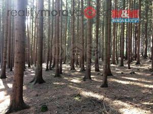 foto Prodej lesa, 2924 m2, Bzenec